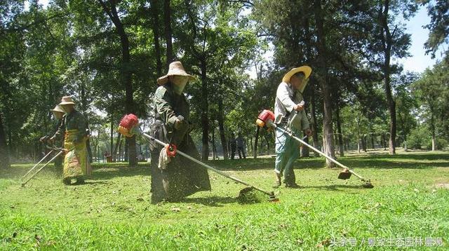 園林景觀綠化養護標準和要點篇-含12個月養護方案