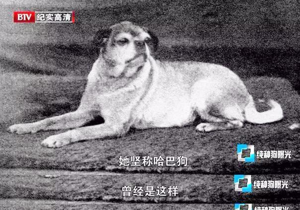 干货!看完后再决定养什么狗吧。现代纯种狗的起源与悲哀。