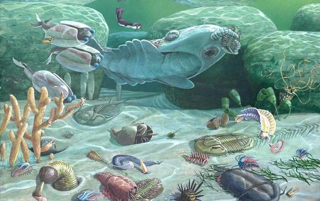 为什么科学家认为章鱼可能不是地球的生物?-第3张图片-IT新视野
