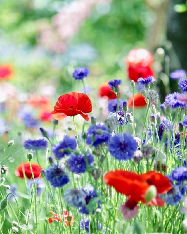 花朵头像带字