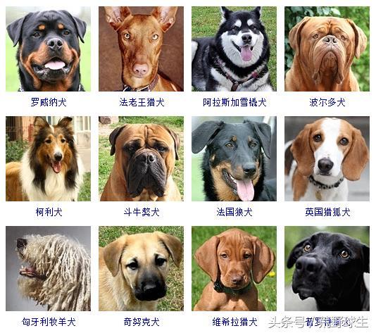 45种狗狗照片,超可爱,超萌!