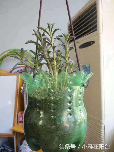 [矿泉水瓶自制花瓶]自制绿萝水培花瓶- 豆丁网