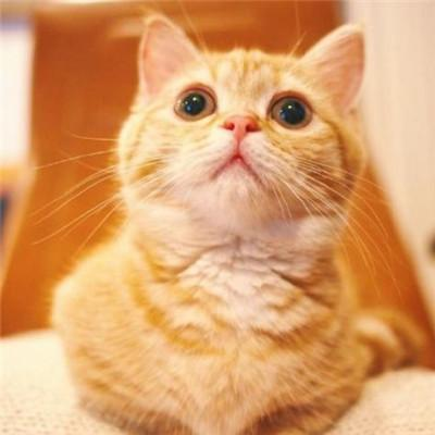 招财猫头像图片大全