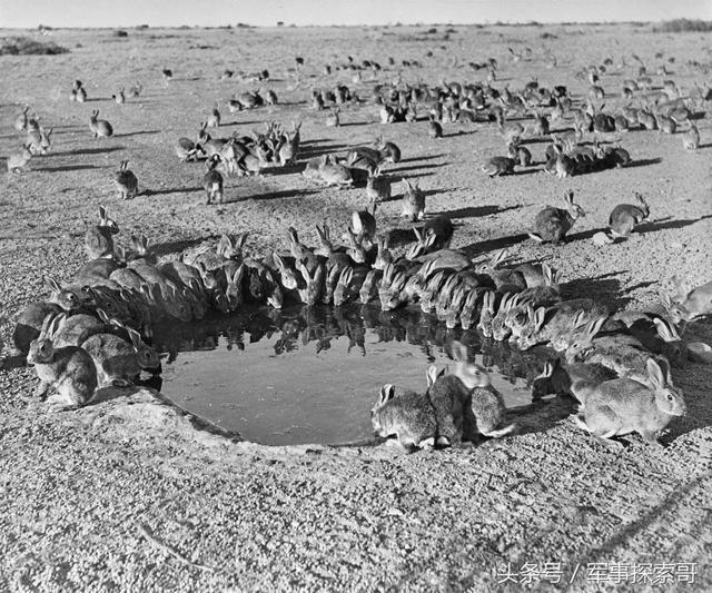非洲草原最无赖最野蛮的动物是什么?见到就会痛下杀手!