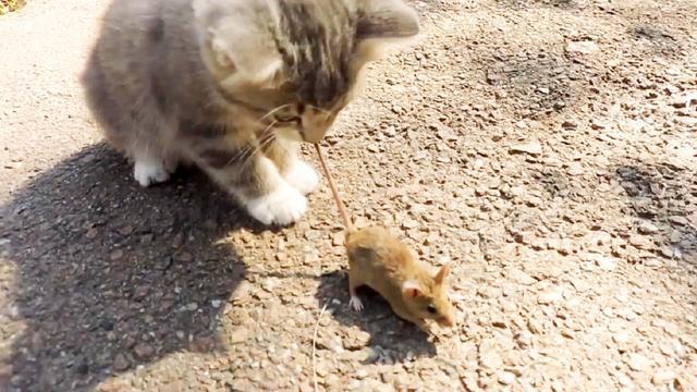 猫爪老鼠图画