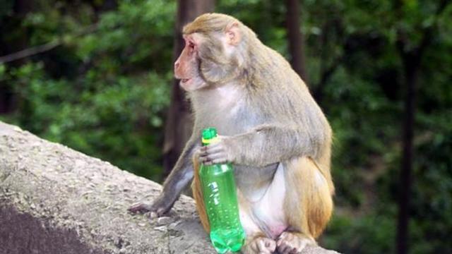 贵阳黔灵山动物图片