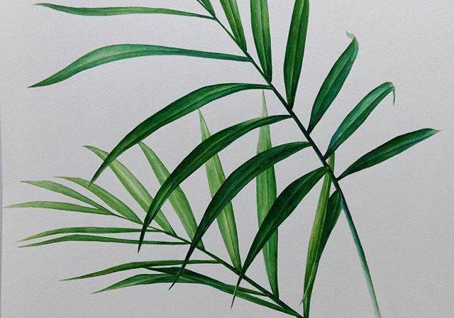 一组绿植叶子手绘~空闲时候来画画叶子吧~