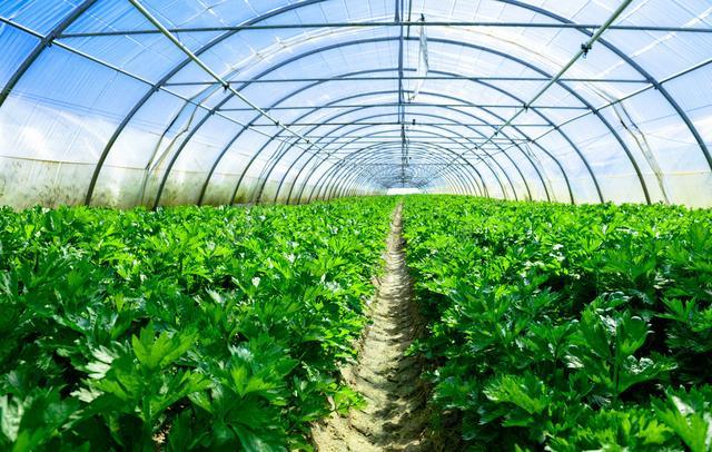 成本低 舜龙农业专业温室工程建设价格 - 中国供应商