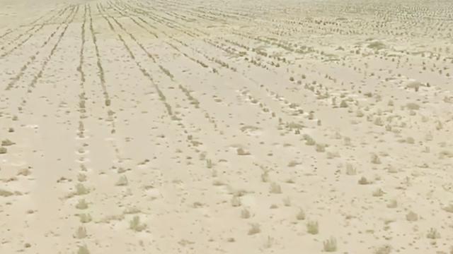 沙漠上能种出水稻?袁隆平最新技术震撼世界,一举打破世界纪录!