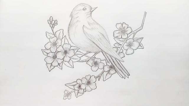 小鸟简笔画步骤图解_语文迷