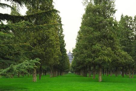 万木皆向阳而生,唯独柏树枝叶向西