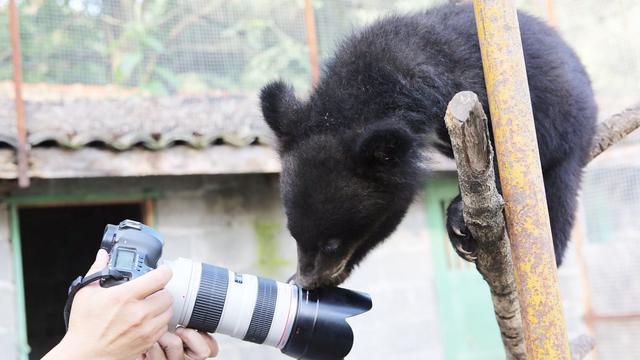 黑熊怪图片