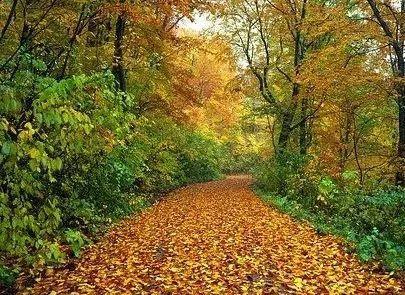 关于秋天的30首古诗词,为孩子收藏,领略古人笔下的秋意之美
