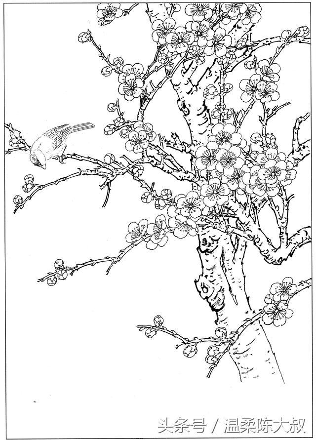 工笔画梅花的画法-露西学画画