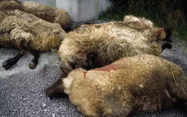 黑龙江、内蒙古多人感染炭疽病!感染炭疽杆菌有啥症状?一文说清