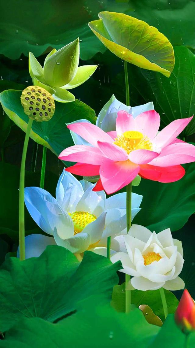 单独一朵花的图片简单