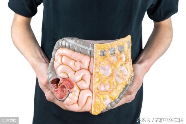 内脏脂肪分布图画高清