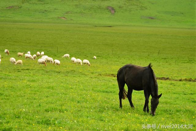四川若尔盖草原花湖,夏季才是最美的季节