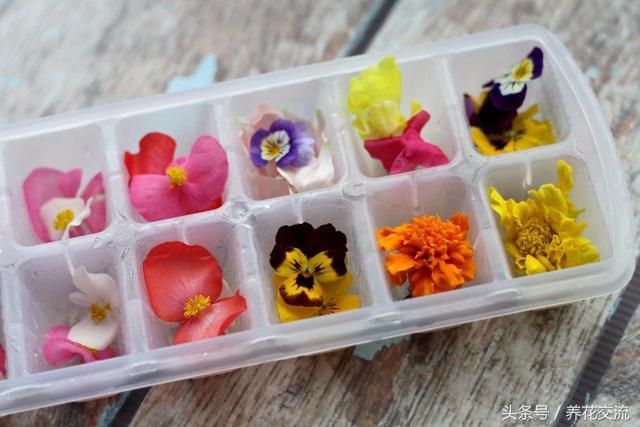 这几种花制成花卉冰块,变成可食用冷饮