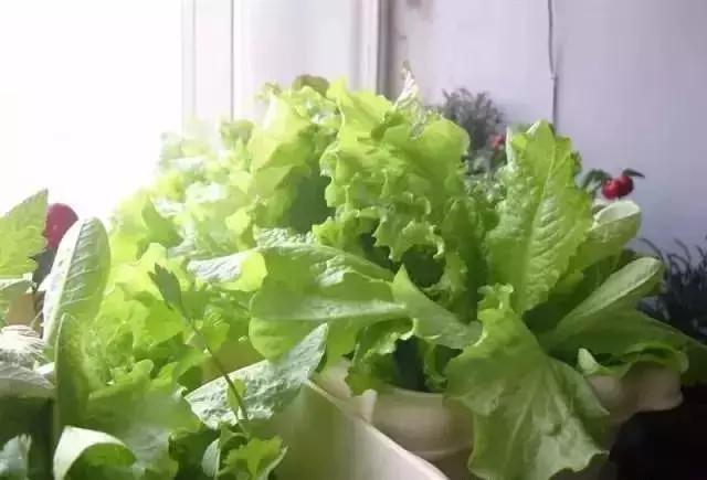 陽臺水管種菜圖片