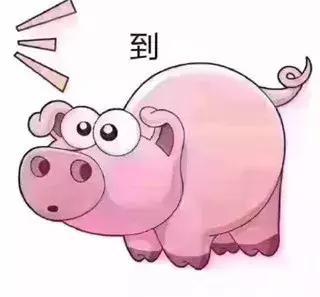 猪吃东西的表情包