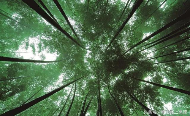 赤水竹海和竹海森林公园区别?