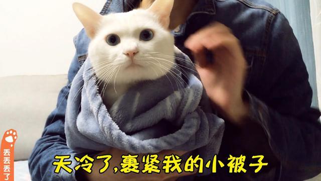 猫咪的小被子,我要裹紧我的小被子