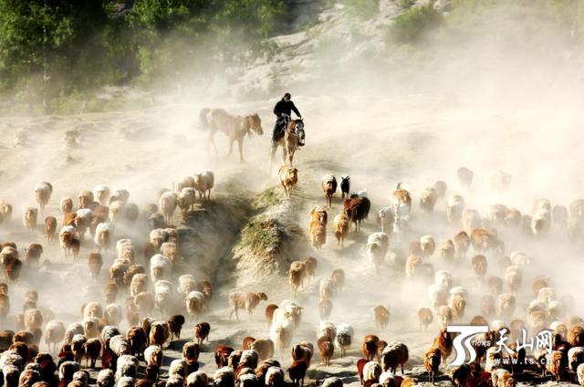 新疆福海县:服务+指导 全力保障疫情期间各族群众正常生活