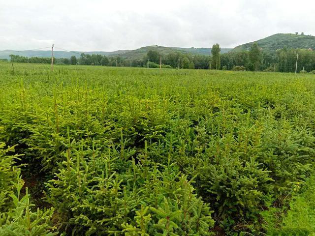 青山绿水映河州 特色林业促发展——2020年上半年临夏州林草工作综述