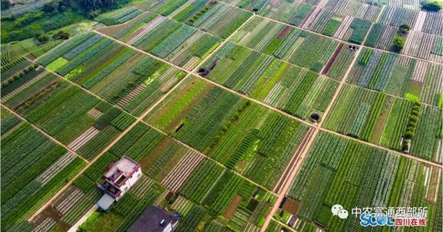 四川省乡村振兴示范县(市、区)案例分析三:泸州市江阳区