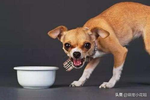 杜宾犬喂食要点