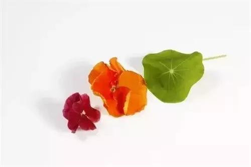 哪些鲜花的花瓣可以食用,标准依据是什... - Powered by Discuz!