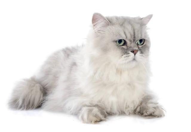 猫有猫藓怎么治疗