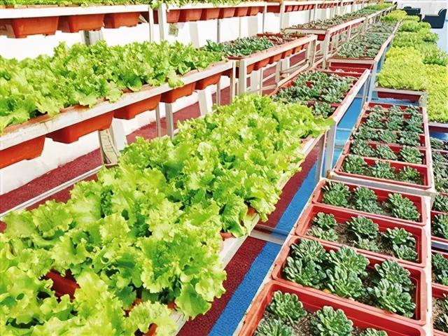 蔬菜温室大棚骨架造价说明-寿光科创温室大棚