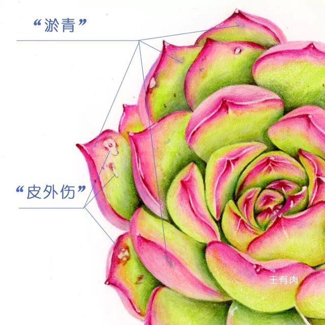 多肉植物的彩铅手绘步骤教程 - 5068儿童网