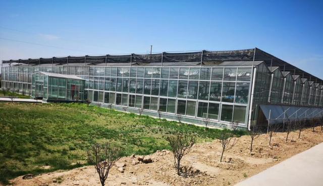 日光温室大棚造价多少-北方温室大棚