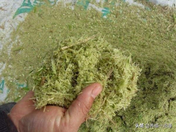 玉米秸秆做青贮饲料成功六字要诀:水、菌、糖、快、实、密