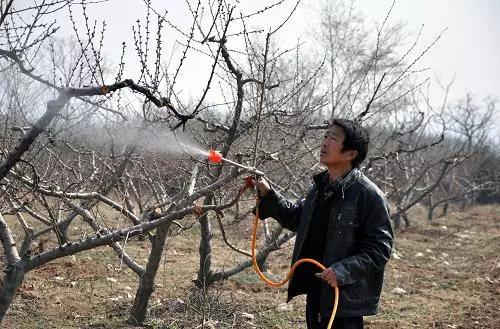 桃树病虫害安全高效防治措施