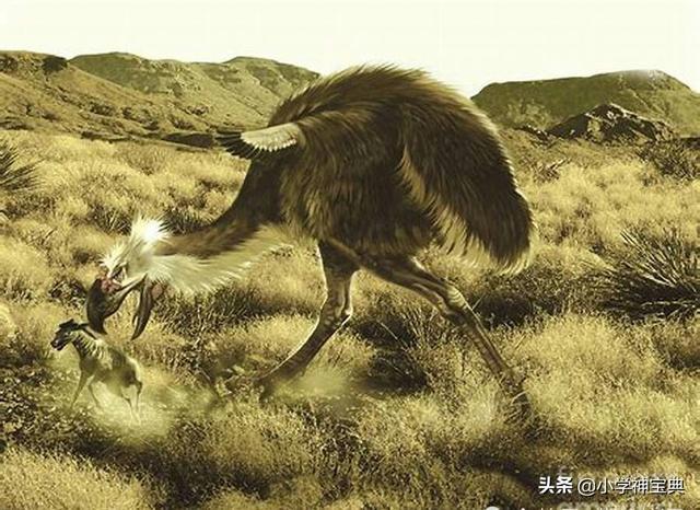 哈斯特巨鹰悠悠球