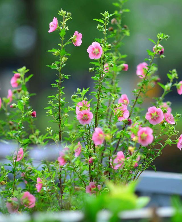 常见100种花卉绿叶