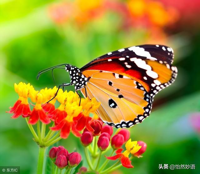 蝴蝶动了一下翅膀、引起了世界的震动