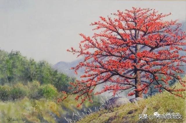 广州市花木棉花图片_花卉图片_三联