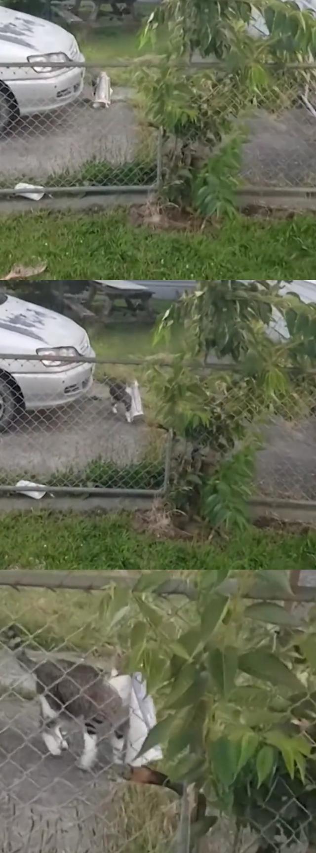 """猫咪派送报纸,报恩""""盗窃"""",主人:根本没有订阅报纸-第2张图片-深圳宠物猫咪领养送养中心"""