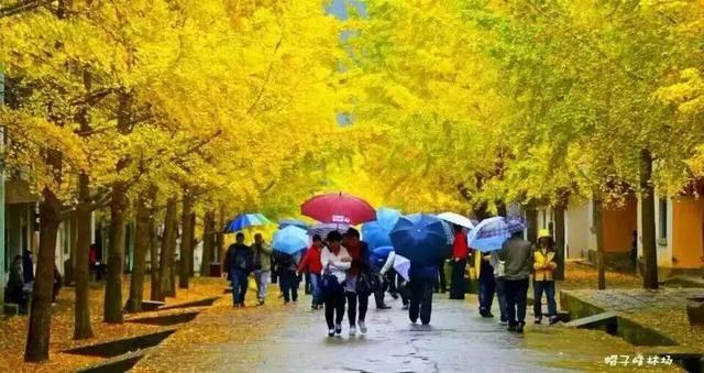 走进中国岭南银杏之乡:在萧瑟的初冬感受南雄的颜值巅峰