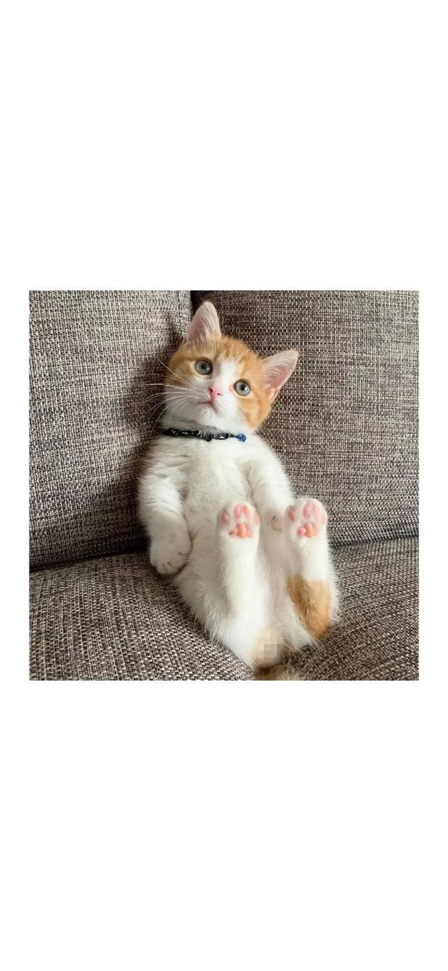 全屏壁紙貓