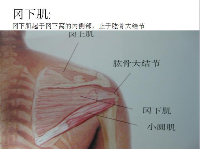 30秒手绘偶像脸部肌肉图 内江90后女孩开画室--中国青年网 触屏版