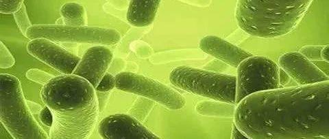 药师带您正确认识微生态制剂(二)
