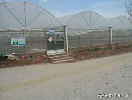 农村搞两亩温室大棚蔬菜需要投资多少钱?造价是多少?