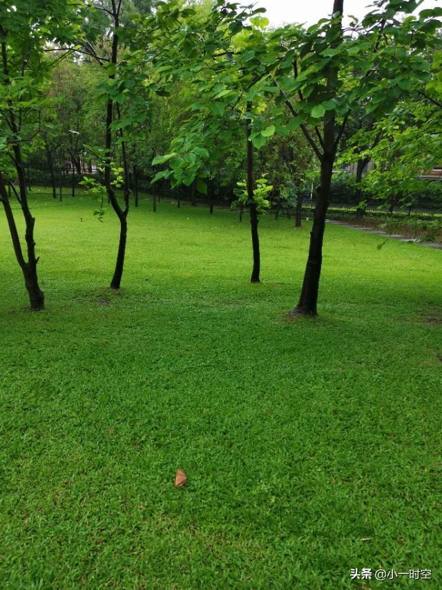 游記:最美人間四月天,這滿眼的新綠…