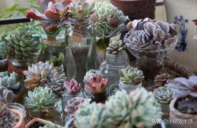 水培植物图片